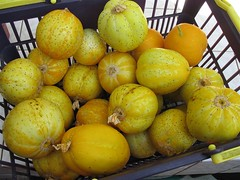 A Basket of Lemon Cucumber