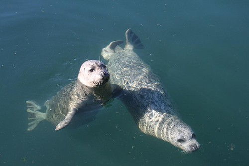 Two begging Seals