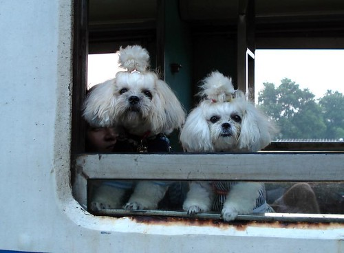dogs in train window.jpg