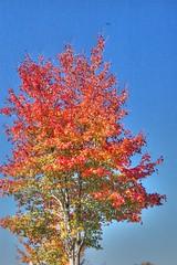 Fall Foliage HDR