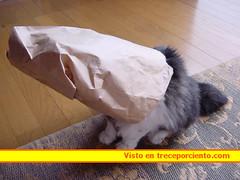 disfraz gato carnaval2006102760_1131267344
