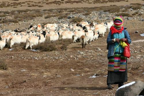 Shepherd girl. Tibet - October 2006