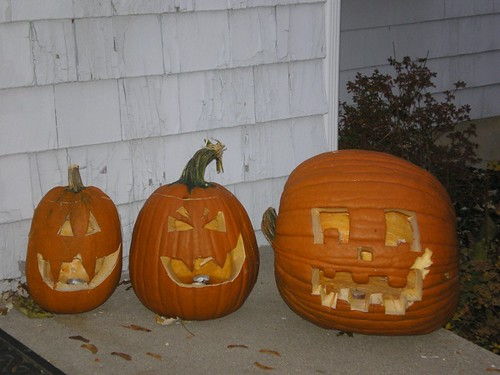 Three cool pumpkins with modest squirrel damage