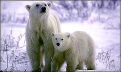polars