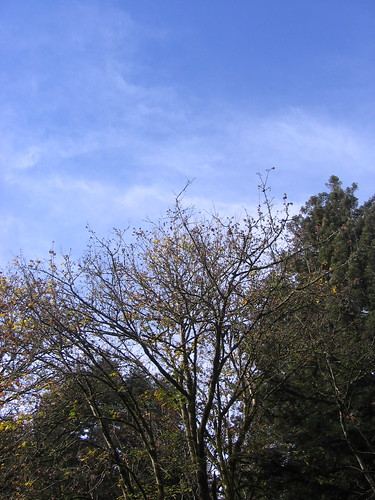Skies o' blue