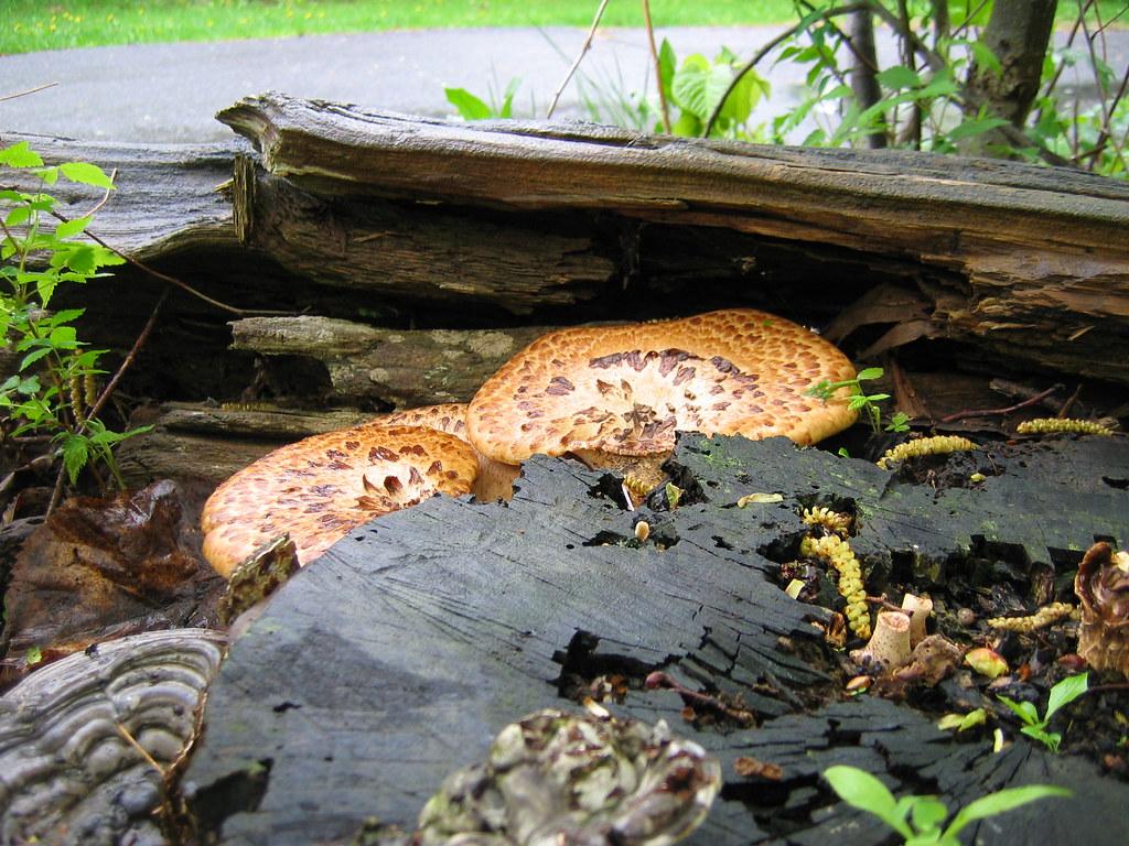 Spring shrooms