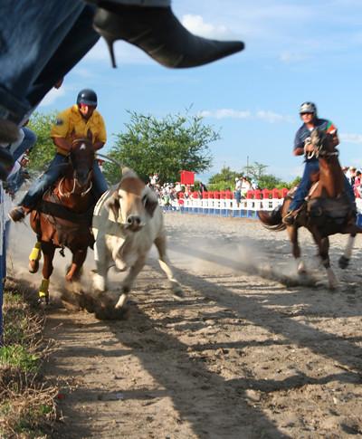 toros coleados en Colombia