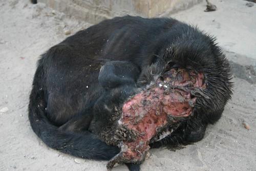 Sick dog!