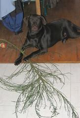 Bruin's tree