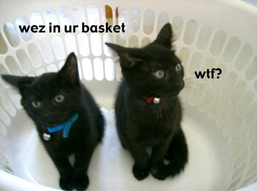 wez in ur basket
