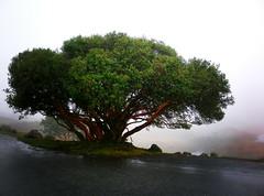 El arbol magico / The magical tree