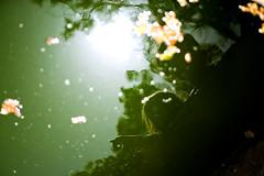 tadpoles photo by razorbern