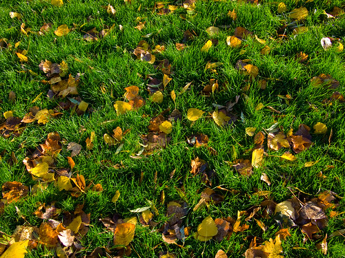 Leaves and Grass