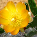 CactusFlower(3813)