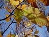 foliage (extreme close-up)