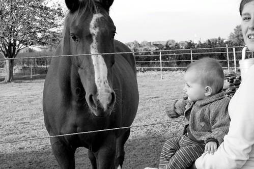Paard kijken