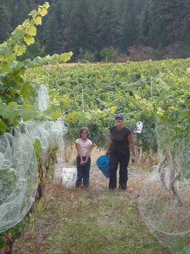 Grape Picking 2006....