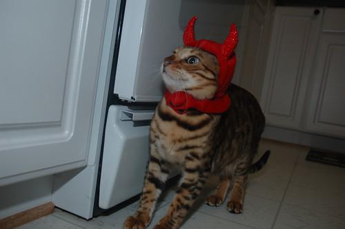 Devil_Wal