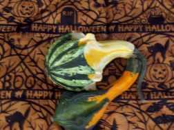 halloween 003