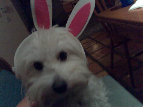 Happy Easter Halloween