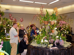 Orchid Judging