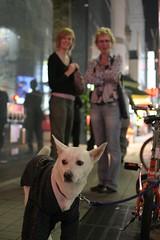 Japanese dog 1