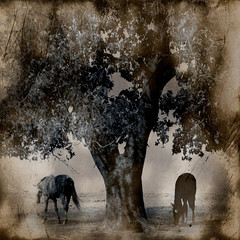 the horses and the tree photo by mëlow