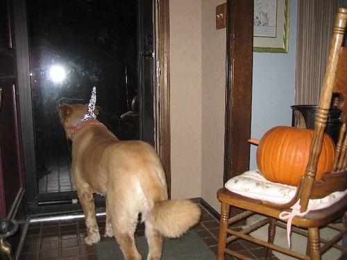2006_HalloweenDog