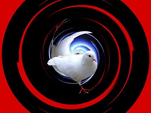 tourterelle blanche en spirale ...
