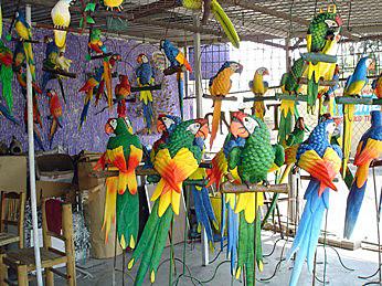 tonala.oiseaux