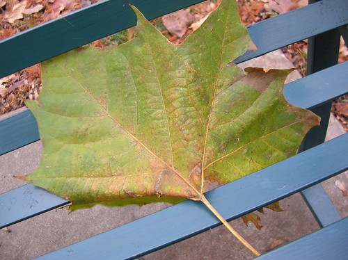 artificially placed leaf