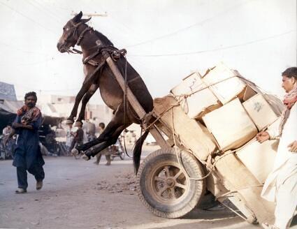 حقوق الحيوان في الاسلام - الرأفة بالحيوان مامور به في ديننا الحنيف