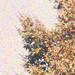 Marronniers en automne, détail (autour de 1920)