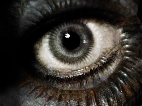 hybridhuman-eye