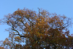 Surrey Autumn #3