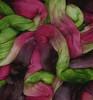 treetops rhubarb