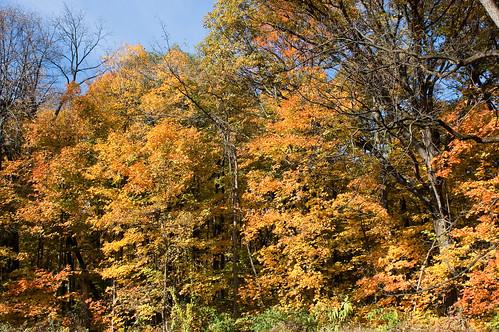 Morton Arboretum-28