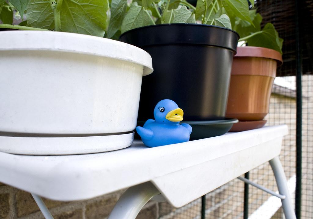 Guard Duck