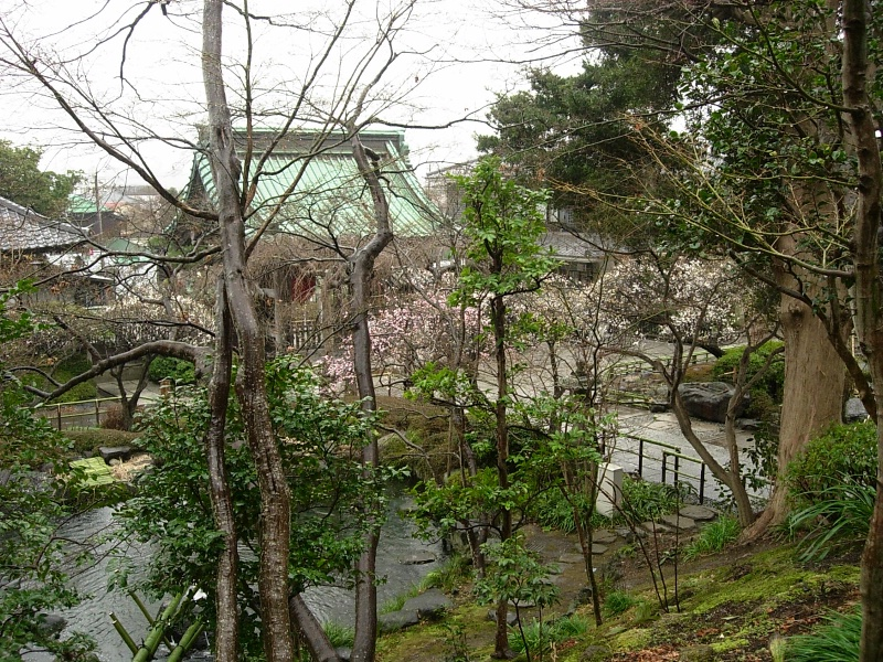 Hasedera's trees and pond.