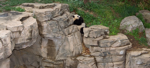 Delicious!  Tai Shan has a seat and munches on some food
