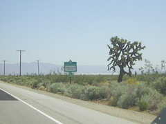 Joshua Tree on Hwy 14.JPG