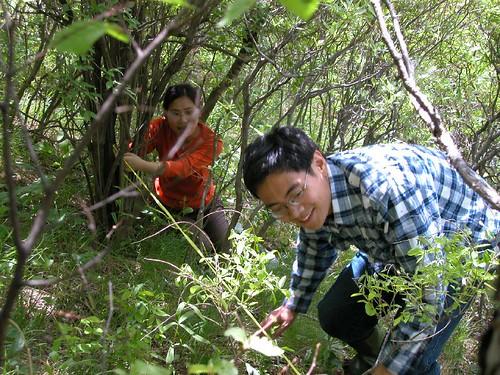 shixi-grade2002-ecology-xiaolongmen-yakou-mengguli-3-2004.5.29
