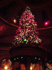 The Dome Edinburgh: Christmas Tree (4)