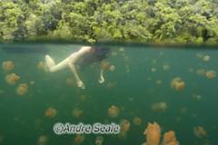Palau agua-viva 4