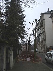 strasbourg tree cutting