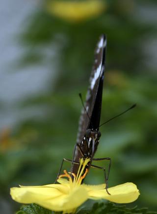 butterfly_macro_original