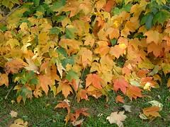 fallen fall branches