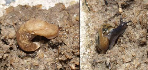 snailsonpoop2