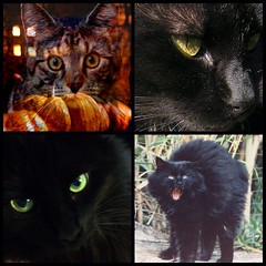 Halloween Mosaic w/other people's photos