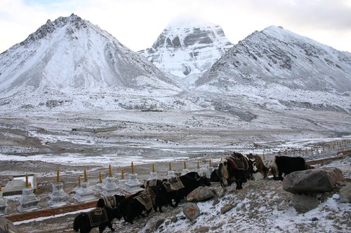 Yaks and Mt. Kailash's North Face...